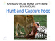 Animal Behaviour Powerpoint Presentation - Senior Biology
