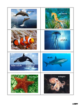 Animal Categorizing: Ocean Animals, Zoo Animals and Farm Animals