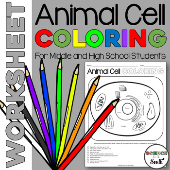 Animal Cell Coloring Worksheet for Middle and High School