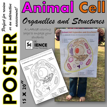 Animal Cell Organelles and Structures Coloring Poster for