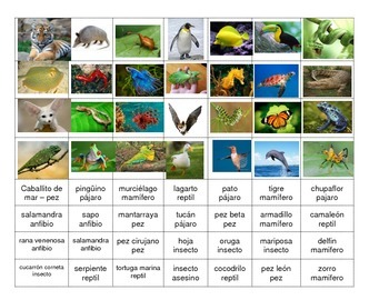 Animal Classification Activity and Center in Spanish