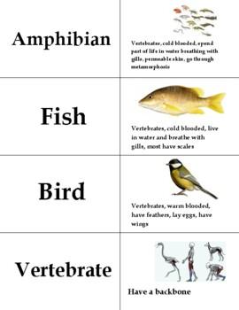 Animal Classification Vocabulary Practice Bundle