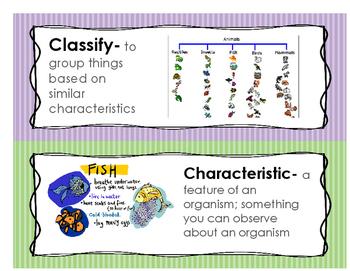 Animal Classification Word Wall