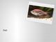 Animal Classification- vertebrates