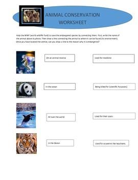 Animal Conservation Worksheet