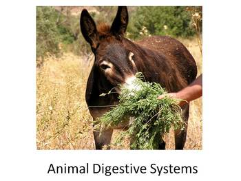 Animal Digestion Unit: Includes Lessons, Activity Pack and