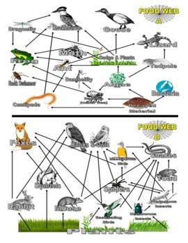 Animal Food Webs