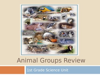 Animal Groups Review