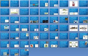 Animal Kingdom Fishes and Amphibians Unit Bundle - 9 files