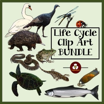 Animal Life Cycle Clip Art Bundle