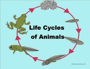 Animal Life Cycles - A 4th Grade SMARTBoard Introduction