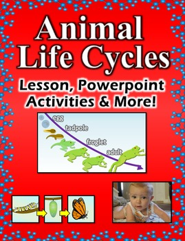 Animal Life Cycles - Lesson, Powerpoint, Activities and More!