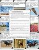 Animal Migration Scavenger Hunt