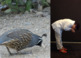 Animal Needs NGSS:Animal Needs: Food ❤ BUNDLE:Activity, Re