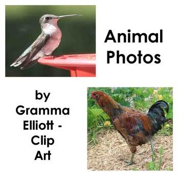 Photographs - Animals for Personal and Educational Commercial Use
