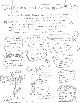 Animal-Pollinated Plants Handout