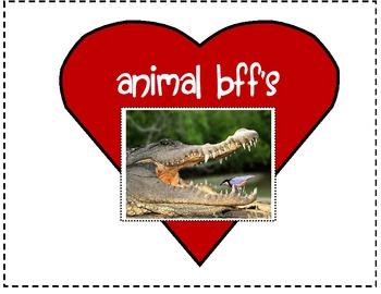 Animal Relationships (Animal BFF's)