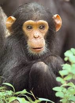 Animal Science- Primates