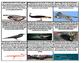 Animal Unit Scavenger Hunt (mammals, reptiles, amphibians,