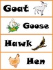 Animal Word Wall Cards and Their Young Activity