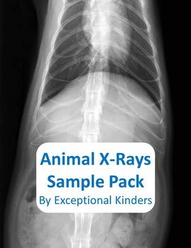 Animal X-Ray Images Free Sample