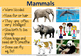 Animal classification posters for classroom