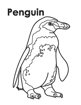 Animal coloring Page: Penguin