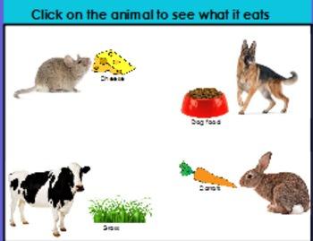 Animal homes and food