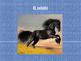 Animal vocabulary in Spanish-power point