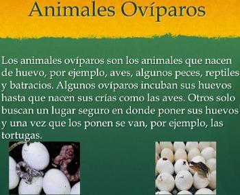 Animales Vertebrados e Invertebrados Dual Language