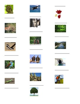 Animals/ Outdoors Graphic Organizer, Expresate Chapter 9 V