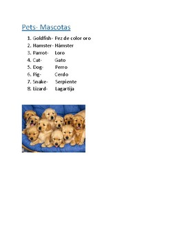 Animals: Pets Vocabulary List