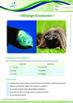 Animals - Strange Creatures: An Irritating Creature - Grade 5