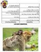 Animals Vocabulary Activities for ELLs
