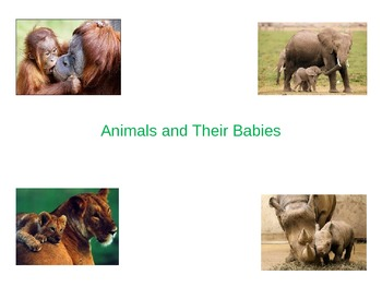Animals and Their Babies Slideshow