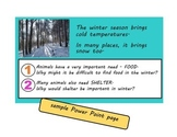 Animals in Winter Unit (hibernation, migration, adaptation)