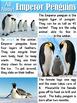 Animals in the Winter ~ Adapting, Hibernating, Migrating Animals