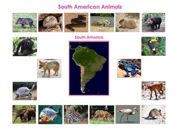 Animals of  South America: Three Part Cards