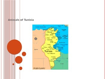 Animals of Tunisia