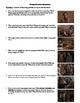 Annie Hall Film (1977) Study Guide Movie Packet