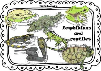 Amphibians        and     reptiles clip art