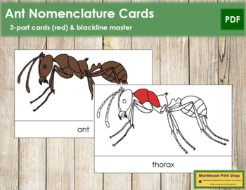 Ant Nomenclature Cards (Red)