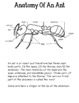 Ant: Aligning 2nd Grade Houghton Mifflin to the Common Core