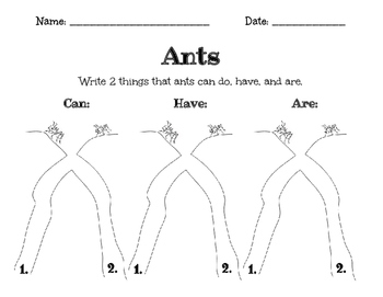 Ants- Can, Have, and Are