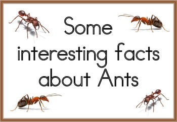 Ants Flash Cards/Posters