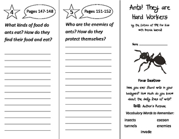 Ants! They Are Hard Workers Trifold - Imagine It 2nd Grade