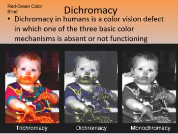 Ap Psychology Myers Unit 4 Sensation and Perception