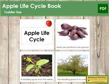 Apple Life Cycle Book - Toddler