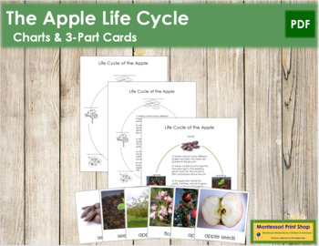 Apple Life Cycle Cards and Charts