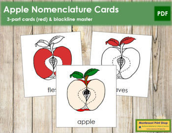 Apple Nomenclature Cards (Red)